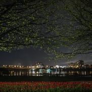 1-monique trotier tulipes la nuit