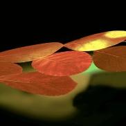 1-Claire-Cloutier-feuilles mortes