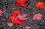 parc chelsea automnemiksang