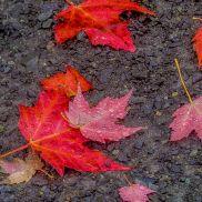 parc chelsea automne miksang