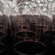 1-monique-trotier-1-verres