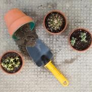 Plantation alternatif