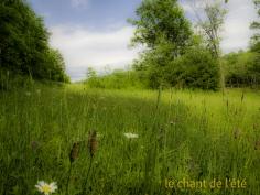 m.trotier-chant-de-lete